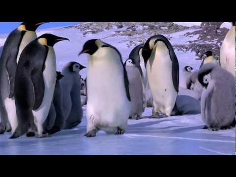 Les plus gros fails de pingouins