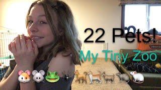 Meet All My 22 Pets Updated