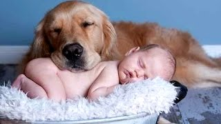 Best Of Funny Cats And Dogs Love Babies Compilation 2015 || NEW