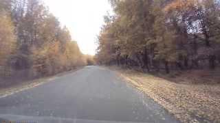 Кенгуру в саратовских лесах