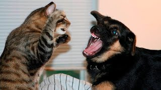Cute Animals Compilation - Funny Cats - Funny Dogs
