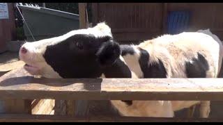 FARM ANIMALS & THEIR SOUNDS (Part 3)  Babies, Toddlers, Preschool, & K-3