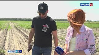 В Омске в 4 раза за полгода выросла цена на морковь