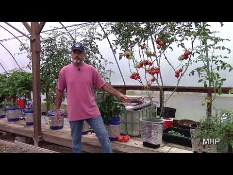 Growing Tomatoes in a Trashcan - Dutch Bucket Hydroponics