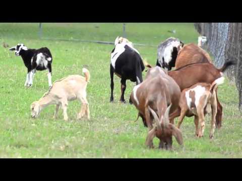 On The Farm - Educational Video by abcteach