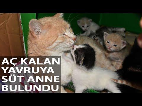 Aç Kalan Yavruyu, Anne Kediye Vefa Sosyal Destek Ekibi Götürdü