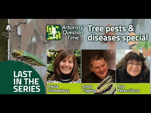 Arborists' Question Time - Tree pests and diseases (Episode 6)