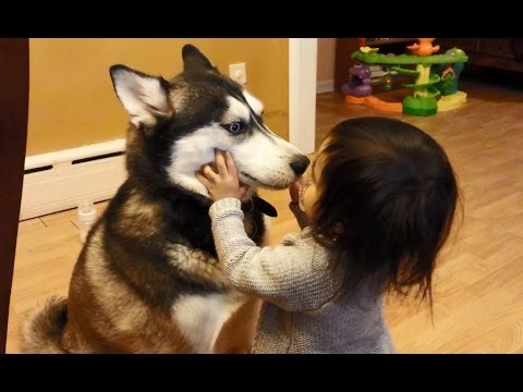 Repeat youtube video Baby Loves Siberian Husky Dog!
