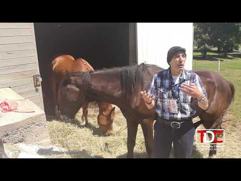 , TDC – The Disability Channel having fun on the Samson Equine Horse Farm, Wheelchair Accessible Homes