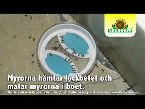 Myr effekt Dosa – SmartaSaker.se