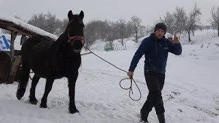 Caii lui Stelica de la Jichisu de Jos, Cluj - 2019 Nou !!!