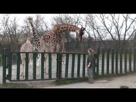 Cvičení žiraf