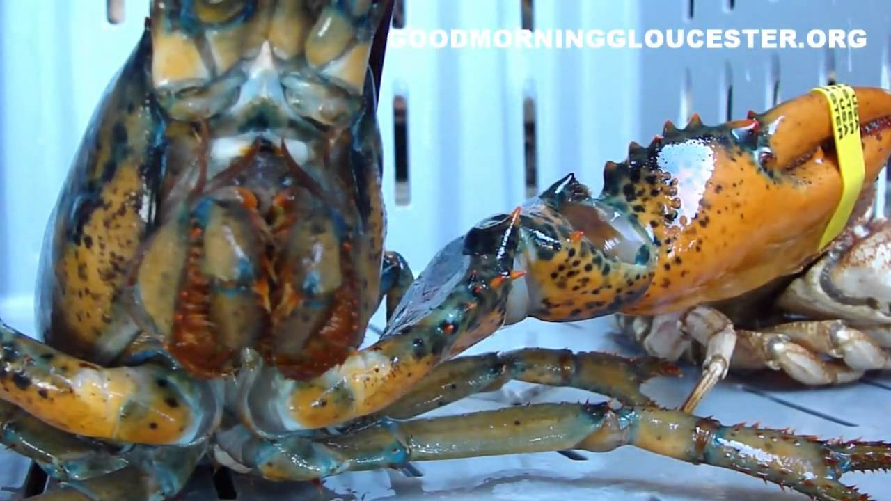 Crayfish Vs Crab