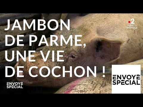 nouvel ordre mondial | Envoyé spécial. Jambon de Parme,  une vie de cochon ! - 4 octobre 2018 (France 2)