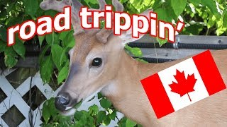 explore the country with me! // travel vlog