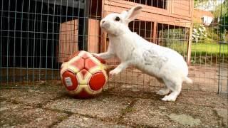 30 Bunny Tricks!!