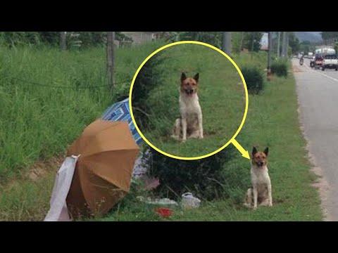 Vjerni pas mjesecima uzalud čekao da se vrati gazda koji ga je ostavio. Onda se dogodilo ovo…