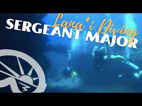 """""""Sergeant Major"""" dive site off Lanai - with Extended Horizons Scuba, Maui, Hawaii"""