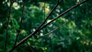 || 8 hours of Rain and Om Frequency For Relaxation || 432 hz