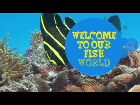 Fish World- Melbourne's premium Aquarium Store