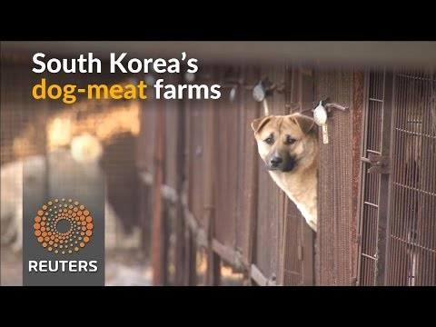 A new lease on life for dogs raised for human consumption in South Korea