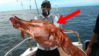 CRAZIEST Animals That Were Recently Discovered!