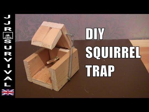 DIY SQUIRREL TRAP