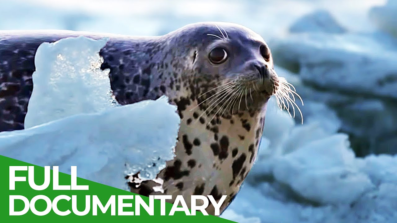 Forces of Nature   Part 3   Flowing Waters   Free Documentary Nature
