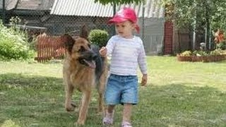 Funny Babies with Funny Dog German Shepherd Videos Funny