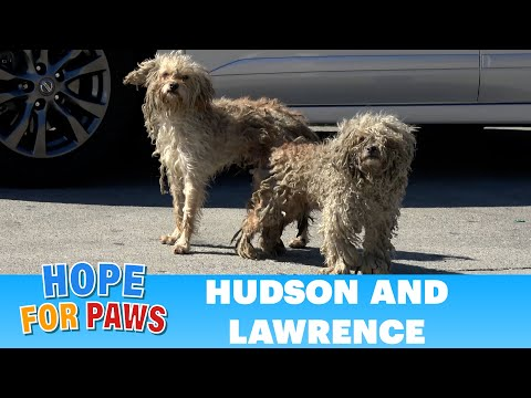 Two homeless dogs, one of them missing HALF of his leg!