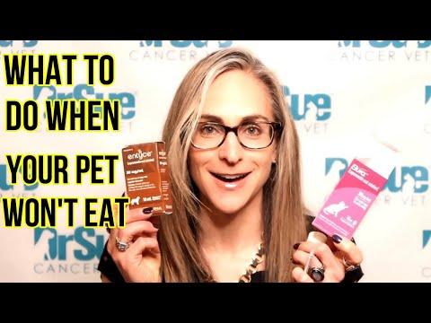 What To Do When Your Pet Won't Eat - VLOG 133