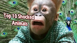 Top 10 Animals Getting Scared Over Nothing (shocked looking animals)