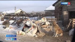 Всё поголовье свиней, находящееся в зоне риска, уничтожено