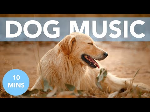 FAST RELAXATION FOR DOGS! Calm Your Dog Quickly!
