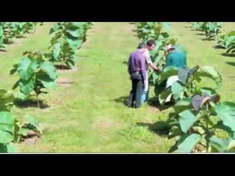 Life Forestry. Anbau und Pflege von Teakbäume sind echtes Handwerk.