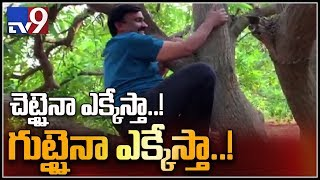 Gali Janardhan Reddy climbing a Mango tree went viral on s..