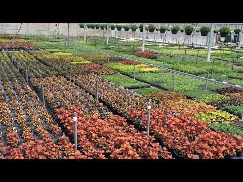 Making It Grow - Gravano Farms