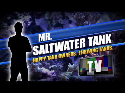 Mr. Saltwater Tank Coverage of MACNA 2017, Part One