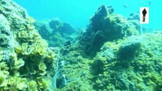 Buceo en Teno (tenerife) HD 720