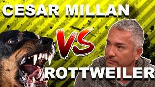 Cesar Millan vs. OVERPROTECTIVE Rottweiler