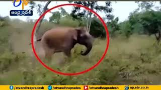 Wild elephant tries to chase bus in forest, video goes vir..