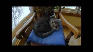 My cat Maxx napping for 6 hours in time-lapse