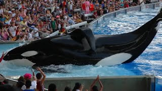 Why Is Seaworld Being Silent About This...!?