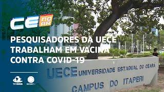 Pesquisadores da UECE trabalham em vacina contra covid-19