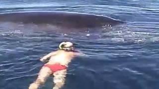 Sauvetage d'une baleine