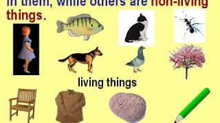 Class 3 Science Living and Non Living Things