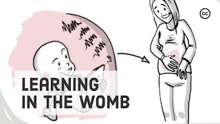 Prenatal Development: What Babies Learn Inside the Womb