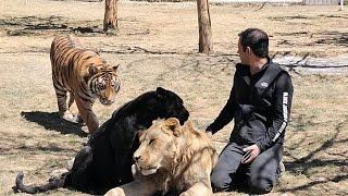 LE - AD Sustentable: Black Jaguar White Tiger - AD