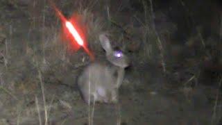 Bowhunting Rabbits NIGHT TIME