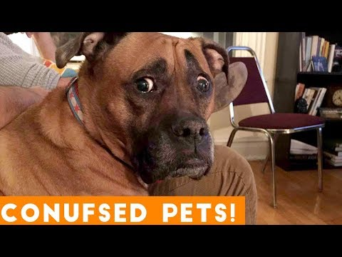Funniest Confused Pets Compilation 2018 | Funny Pet Videos